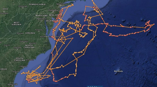 Ocearch data storytelling example